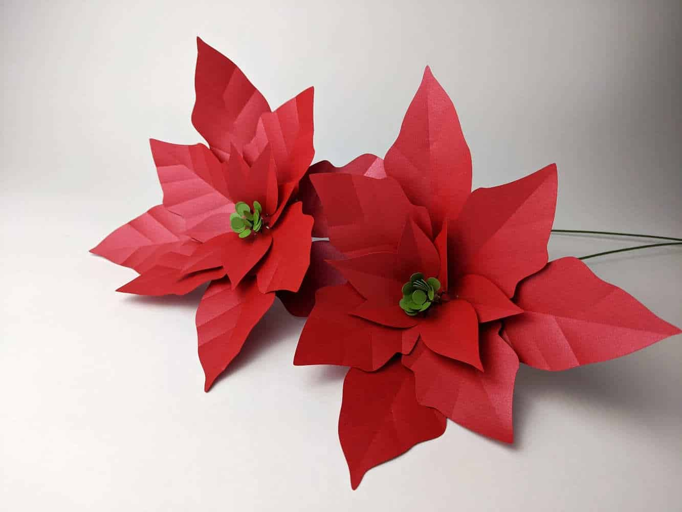 Paper Poinsettia Flower Template