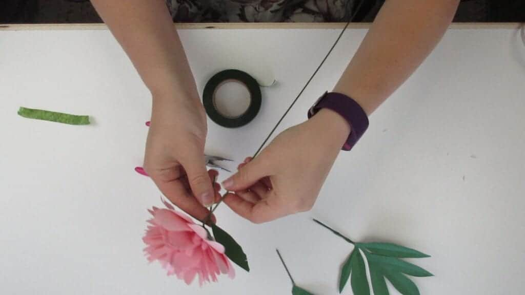 taping on the leaves of the paper peony